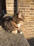 Cordwainers Cat in the sunshine